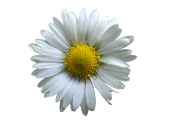 flower-1978207_960_720