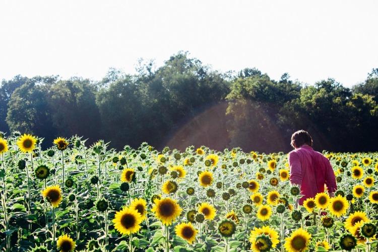 sunflowers-945408_960_720