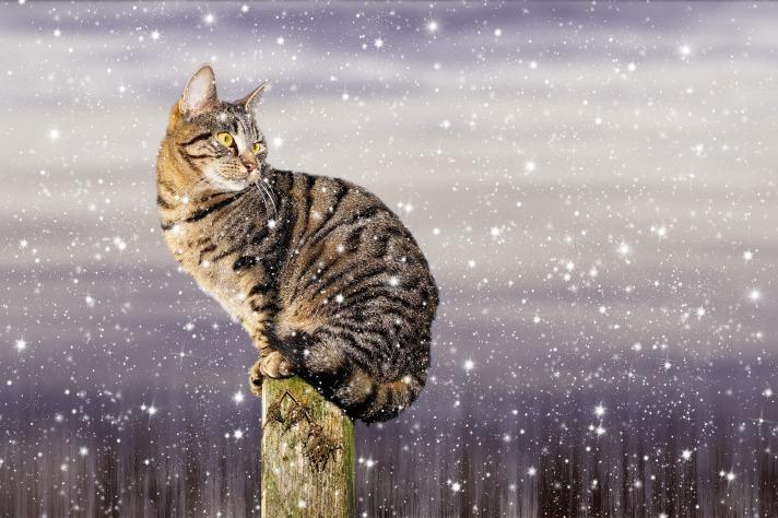 cat-1890495_1920