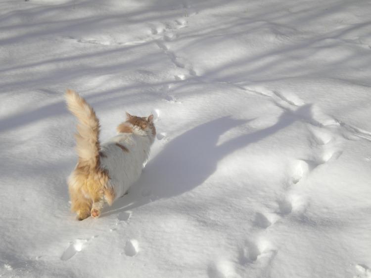 cat-walking-2141556_1920