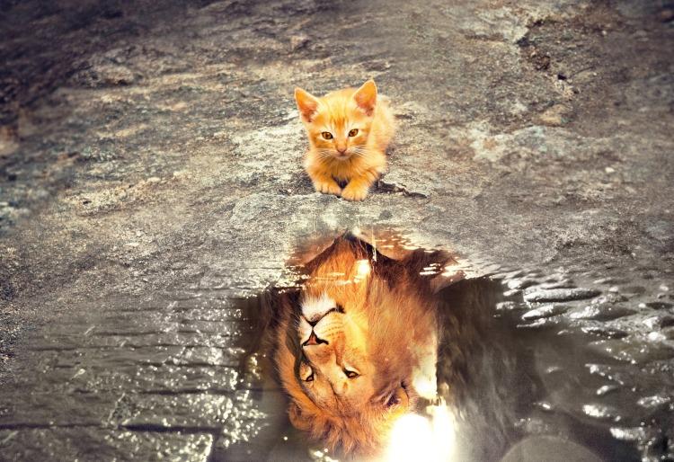 cat-3809563_1920.jpg