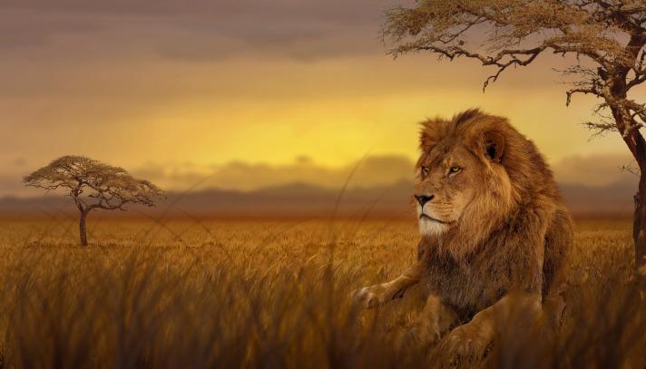 lion-3276692_1920