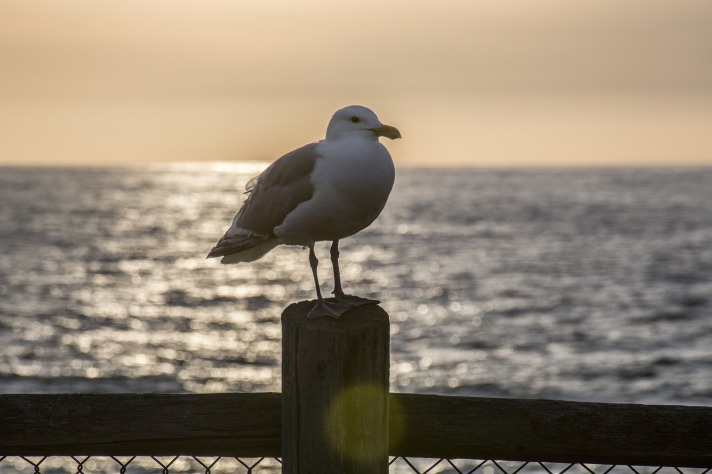 seagull-3917656_1920