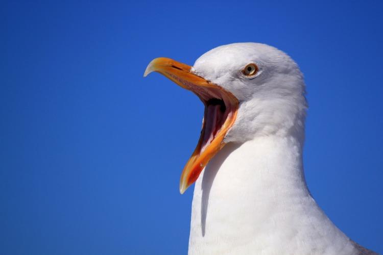 seagull-249638_1920