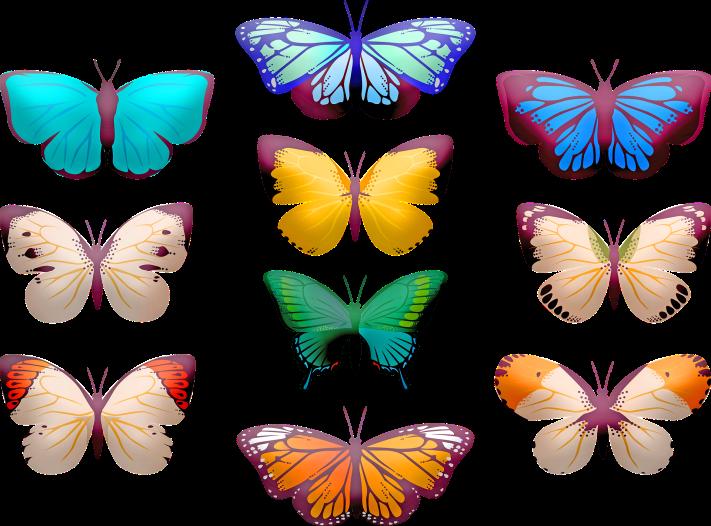 butterfly-clip-art-4117065_1920