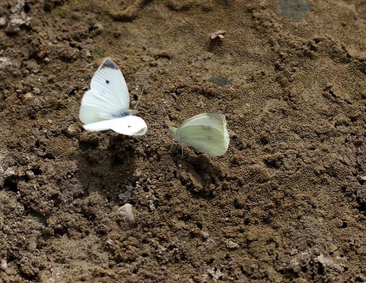 butterfly-2802016_1920