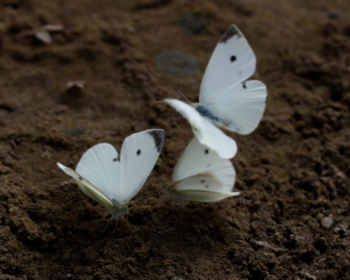 butterfly-2802018_1920