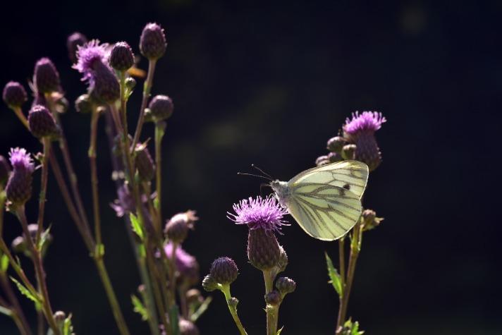 butterfly-3510716_1920