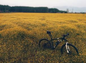 montainbike-918426_1920
